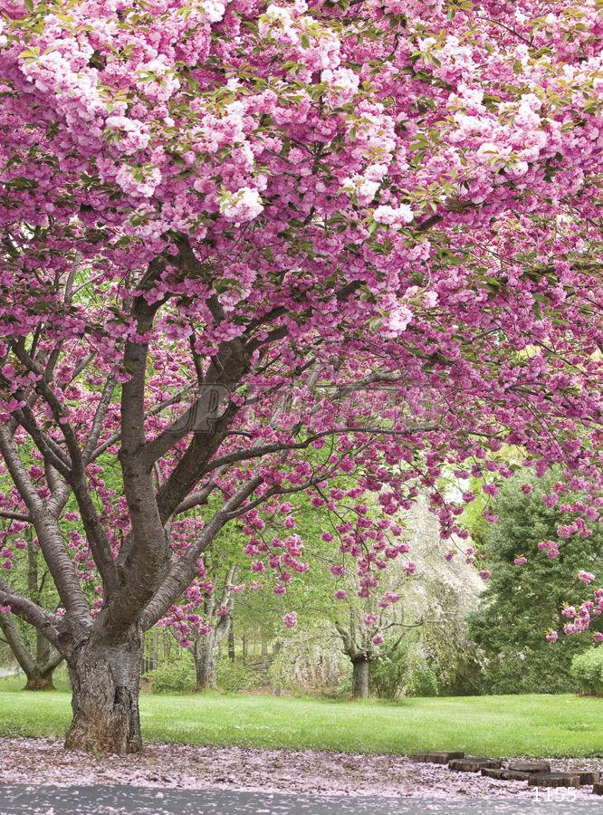 это картинки с вишневым цветом подача рамекинах