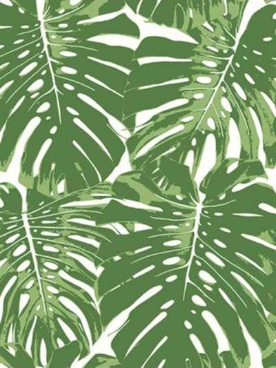 листья зелёные картинка